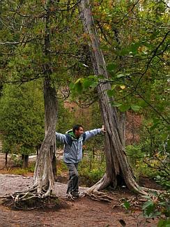 oshana spiral trees lake superior